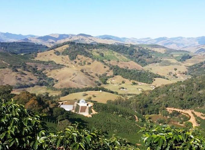 ブラジル サンタ・イザベル農園 カップ・オブ・エクセレンス2015