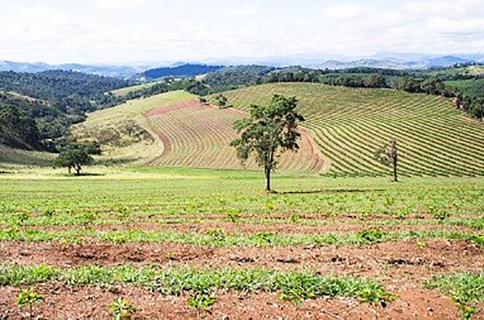 ブラジル サントゥアリオ スル農園 ニューフレーバー