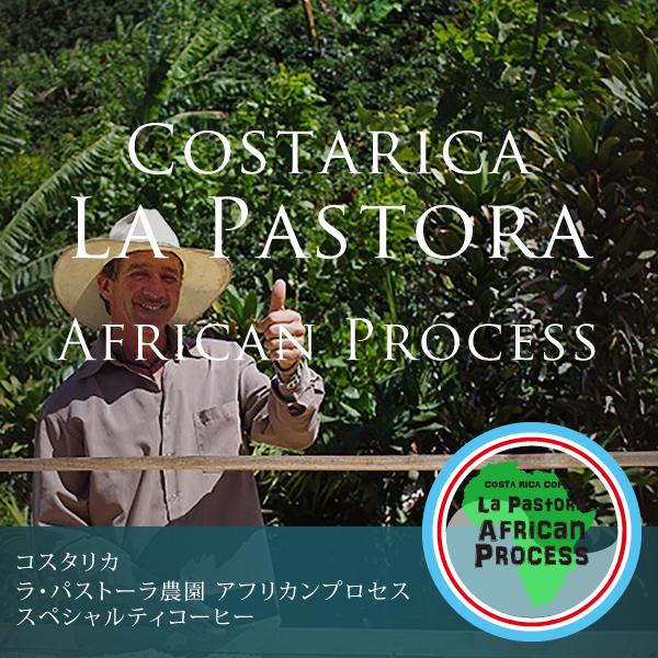 コスタリカ ラ・パストーラ農園 アフリカンプロセススペシャルティコーヒー