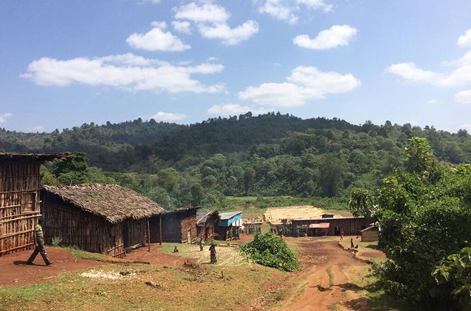 エチオピア シダモ ナチュラル