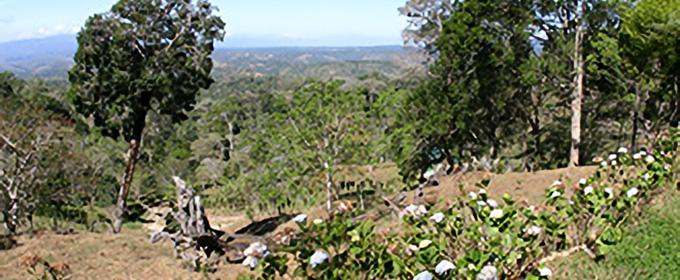 パナマ フィンカ ラ・アウロラ農園 イメージ画像2